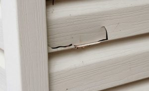 Holes in Your Siding